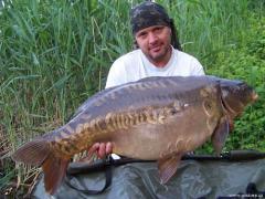 Goldcarp - 17,3kg